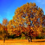 tree_fall_fall_colors