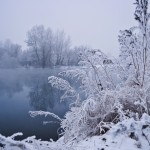 winter_fog_200959